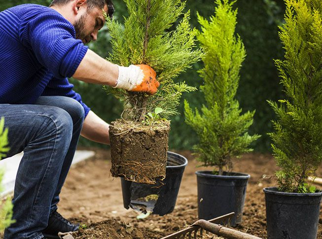 landscaping company worker planting shrubs